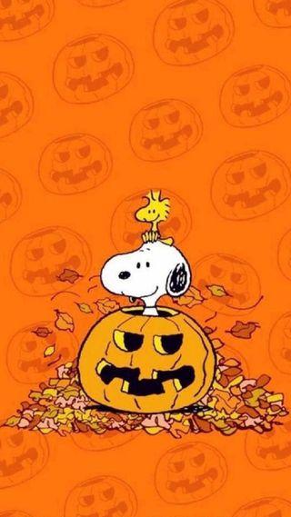 Обои на телефон снупи, хэллоуин, темы, птицы, привет, мультфильмы, милые, кошки, везучий, ведьма, peanuts, hello, halloween snoopy