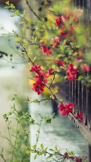 Обои на телефон huggable, red flowers, красые, аниме, милые, цветы, девушки, медведь, обнимать