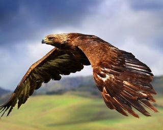 Обои на телефон сокол, орел, птицы, перо, небо, крылья, король, king of the sky