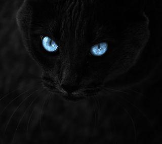 Обои на телефон пантера, черные, животные, дикие, глаза