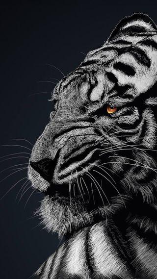 Обои на телефон дикие, тигр, лев, животные, hd
