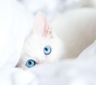 Обои на телефон синие, кошки, глаза, cat blue eyes, 2160x1920