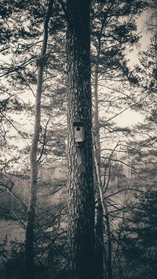 Обои на телефон черно белые, природа, лес, деревья, дерево, birdhouse