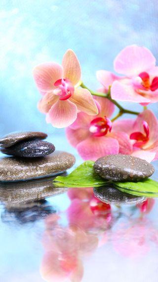 Обои на телефон дзен, цветы, спа, орхидеи, капли, камни, вода