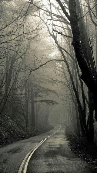 Обои на телефон серые, лес, дорога, дерево, восход, великолепные, forest at daybreak