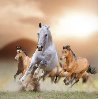Обои на телефон лошади, тема, лошадь, дикие, гоночные, арт, west, horse 2, art