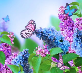 Обои на телефон бабочки, цветы, фиолетовые, сирень, синие, прекрасные, арт, art