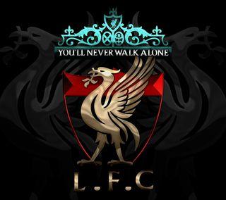 Обои на телефон футбольные клубы, птицы, ливерпуль, воин, англия, reds, liverpool fc ynwa, liver, anfield