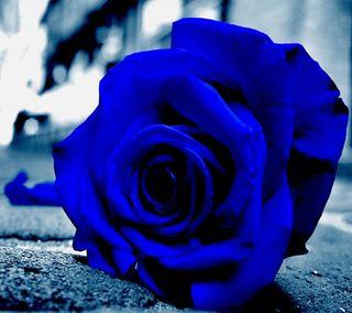 Обои на телефон синие, розы, fhg