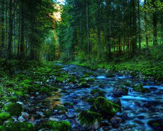 Обои на телефон сосна, джунгли, река, озеро, лес, камни, закат, деревья, hd