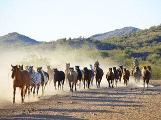 Обои на телефон лошади, лошадь, красота, животные, дикие
