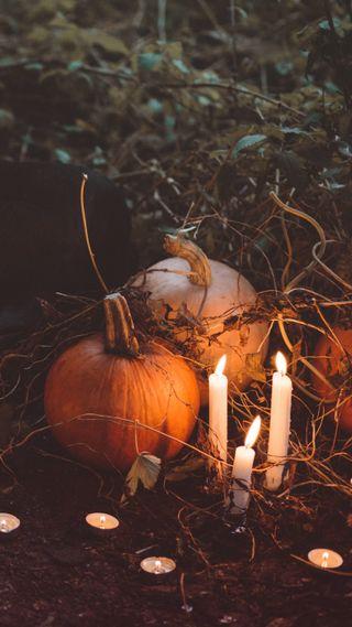 Обои на телефон тыква, хэллоуин, страшные, осень, zedgepumps18, scary pumpkins, gourds