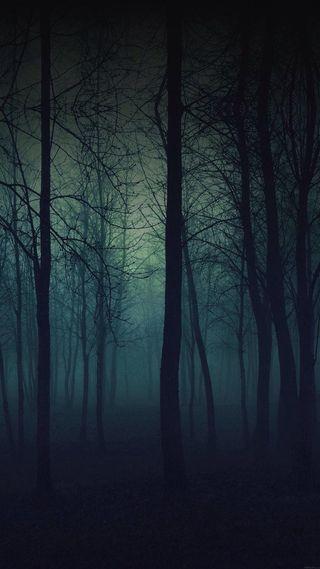 Обои на телефон туман, жуткие, темные, природа, ночь, лес, деревья
