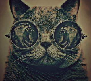 Обои на телефон очки, лев, кошки, котята, cat and lions