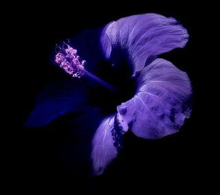 Обои на телефон отлично, черные, цветы, фиолетовые, прекрасные, beautiful flower