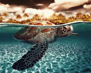 Обои на телефон черепаха, остров, океан, вода