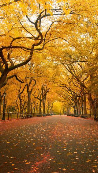 Обои на телефон сезон, парк, осень, новый, йорк, ny, central