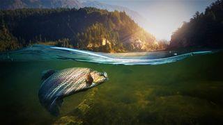 Обои на телефон рыбалка, подводные, рыба, природа, любовь, вода, love