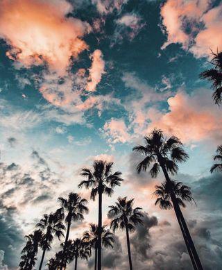 Обои на телефон фотография, путешествие, природа, пляж, небо, красочные, калифорния, деревья, trees hd, plams and skies