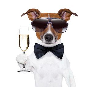 Обои на телефон шампанское, год, счастливые, собаки, новый, крутые, забавные, new year dog, happy, 2014
