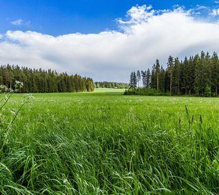 Обои на телефон трава, природа, поле, пейзаж, лес
