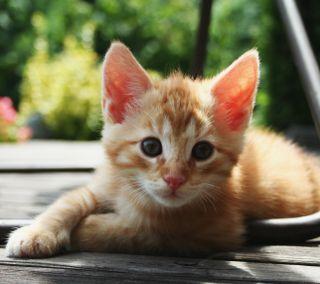 Обои на телефон каваи, питомцы, оранжевые, малыш, кошки, котята, животные, восхитительные, orange tabby