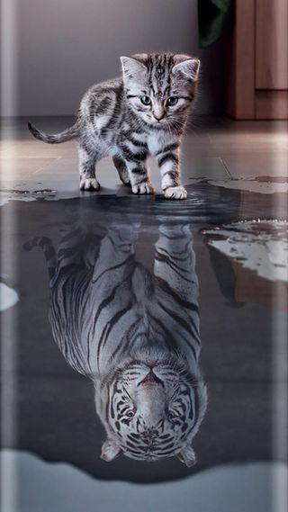 Обои на телефон тигр, котята, riflesso, icio