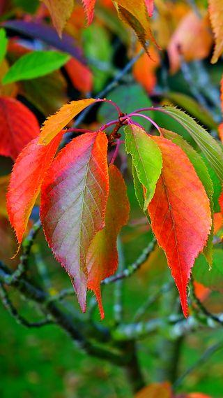Обои на телефон флора, думать, утро, природа, прекрасные, позитивные, осень, оранжевые, наслаждаться, макро, листья, красые, зеленые, желтые, день, think positive, good day