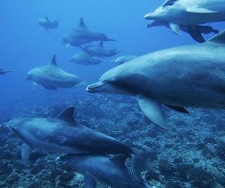 Обои на телефон подводные, милые, дельфины