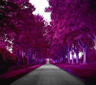 Обои на телефон трава, фиолетовые, путь, листья, дорога, дерево