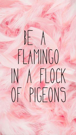 Обои на телефон перья, цитата, розовые, pink feathers, pigeons, flamingo