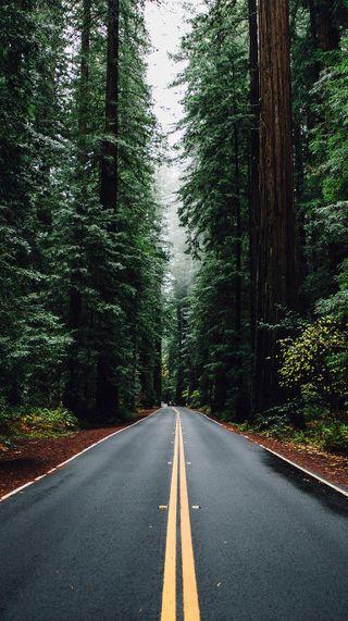 Обои на телефон прекрасные, лес, дорога, деревья, road and trees