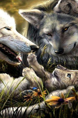 Обои на телефон семья, волк, белые, white wolf, cub