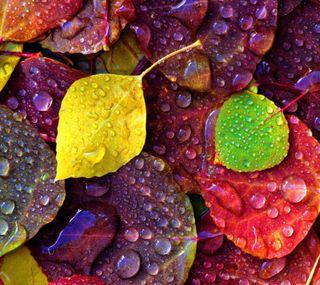Обои на телефон осень, природа, листья, красочные