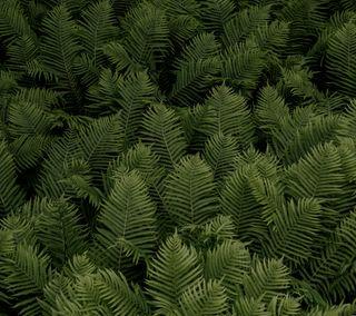 Обои на телефон дикие, простые, природа, красочные, зеленые, жизнь, lush, greenery, ferns