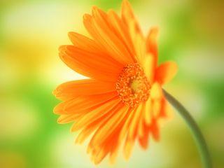 Обои на телефон свежие, цветы, оранжевые, лето, весна, orange flower