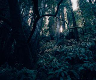 Обои на телефон джунгли, природа, пейзаж, на улице, лес, дерево, zedgearday17, arbor
