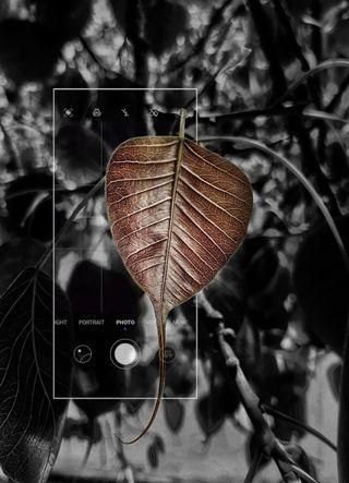 Обои на телефон шри, естественные, sri lankan natural