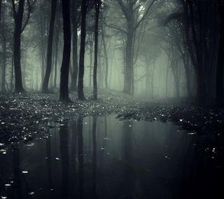Обои на телефон темные, природа, одинокий, лес, дерево, swamp, hd
