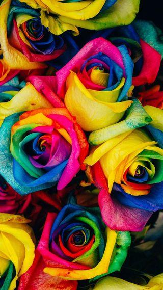 Обои на телефон радуга, розы