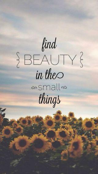 Обои на телефон подсолнухи, маленький, дела, красота, small things, find