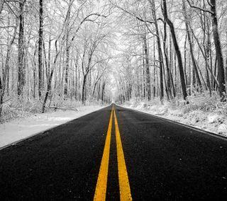 Обои на телефон холод, улица, снег, полосы, зима, дорога, деревья, белые, avenue
