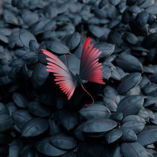 Обои на телефон птицы, черные, рыба, природа, премиум, попугаи, любовь, бабочки, tariq collection, tariq, love, aves