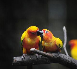Обои на телефон матовые, птицы, природа, любовь, летать, животные, дерево, ветка, pair, love