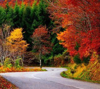 Обои на телефон природа, прекрасные, осень, листья, лес, дорога, деревья