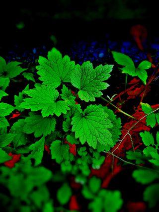 Обои на телефон hd, 2018, jeanunlimited, природа, цветы, зеленые, листья, экран блокировки, сентябрь