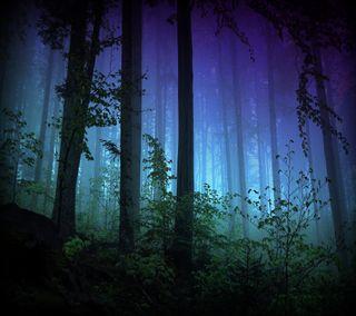 Обои на телефон ночь, лес, night forest, 2160x1920