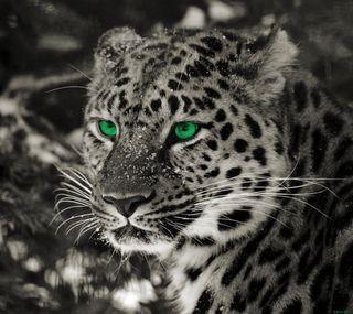 Обои на телефон леопард, самсунг, кошки, животные, глаза, галактика, samsung, leopard hd, galaxy