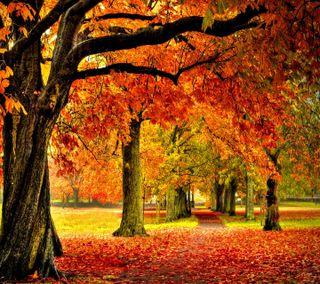 Обои на телефон парк, приятные, осень, взгляд, autumn park