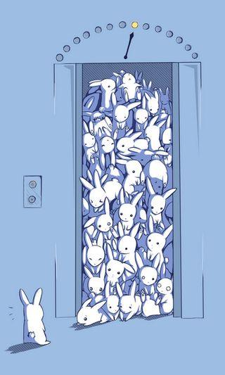 Обои на телефон юмор, мультфильмы, bunnies